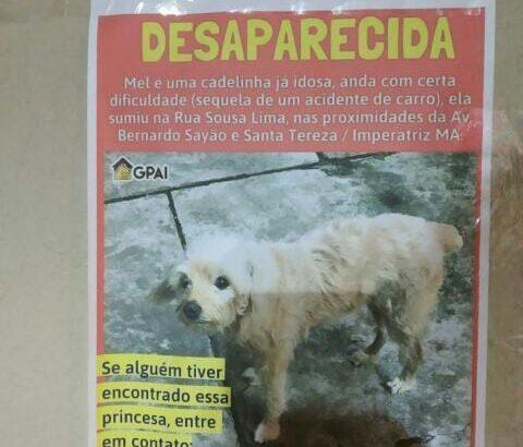 Cachorrinha desaparecida