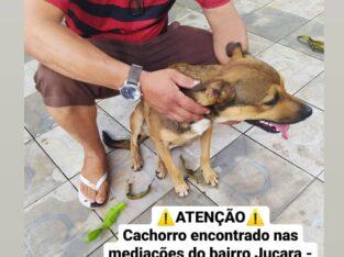 Cachorro perdido