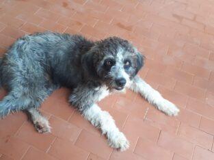 Cachorrinho perdido na rua Godofredo Viana