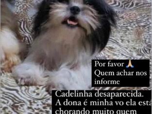 Cachorrinha desaparecida Bacuri