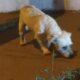 Dog perdido