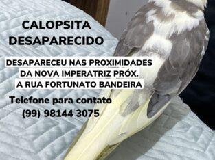 CALOPSITA DESAPARECIDA
