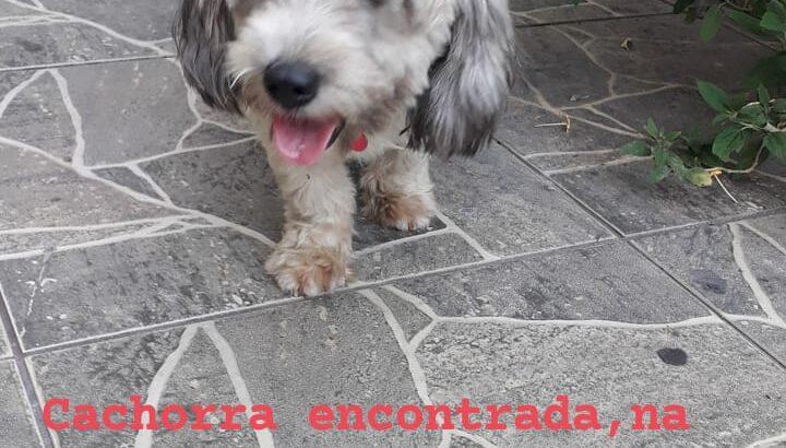Cachorra encontrada