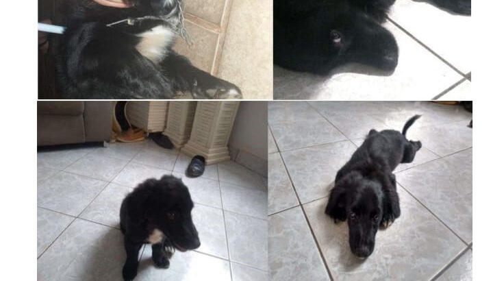Cachorrinho preto desaparecido