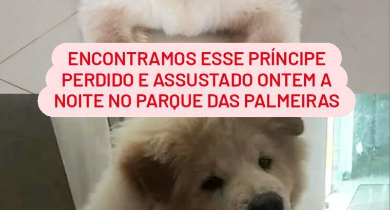 Cachorro encontrado no Parque das Palmeiras