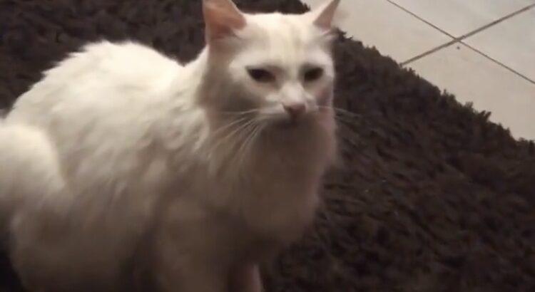 Meu gato fugiu na madrugada de segunda