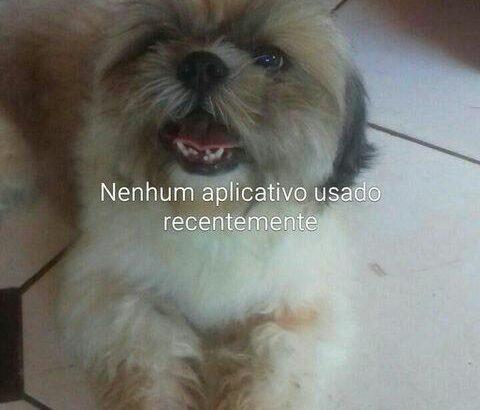 Cachorro shitsu banco com marron.
