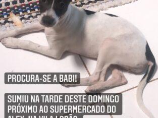 Cadelinha perdida na Vila Lobão