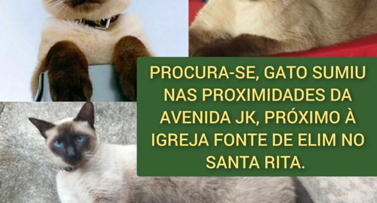Gato siamês perdido