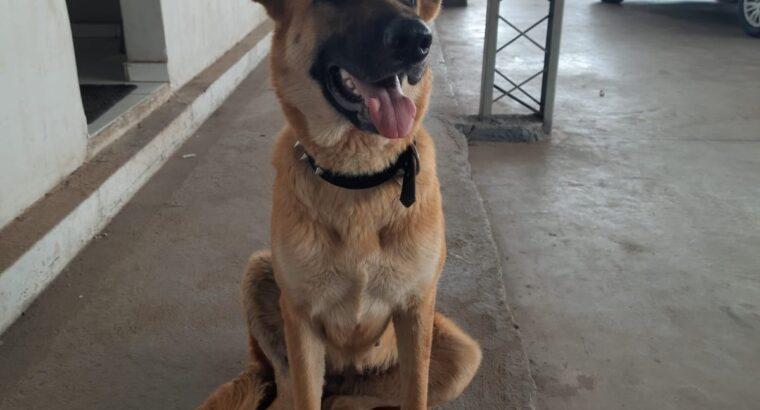 Cachorro perdido no Maranhão Novo
