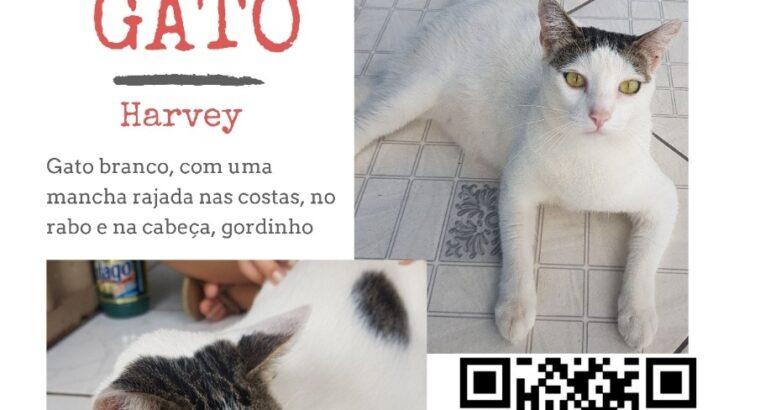 Gato desaparecido dou RECOMPENSA PARA QUEM ENCONTR