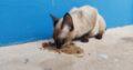 Animal perdido no estacionamento do Assaí Atacadis